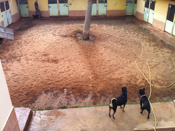 שעת כושר - הכלבים יוצאים לחצר