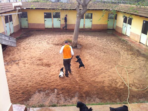רמי משחק עם הכלבים